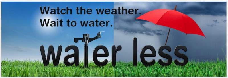 Watch the Weather - Wait to Water.JPG